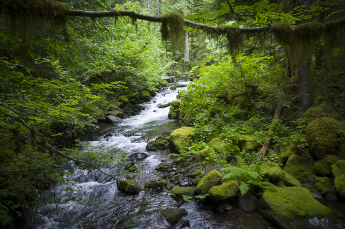 3. Going for a hike through the Gifford Pinchot Forest.