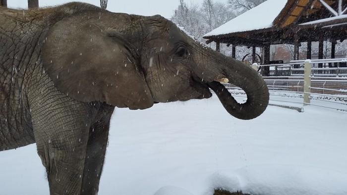 4. Hogle Zoo, Salt Lake City