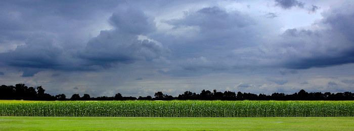 2. Did you know every year roughly half of the cropland in Indiana is planted with corn?