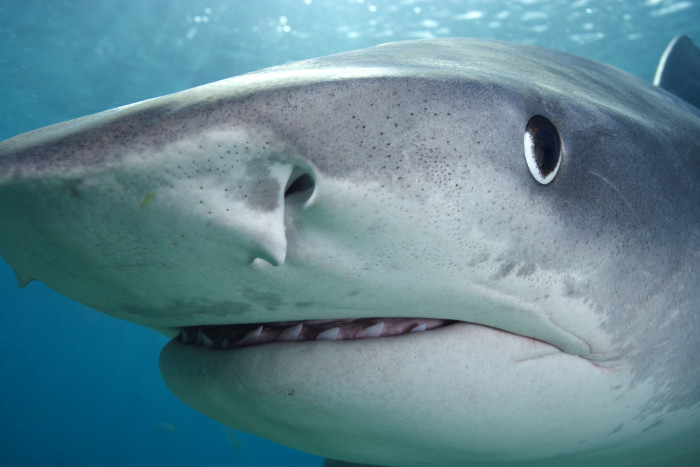 13.  Sharks are a definite force to be reckoned with.