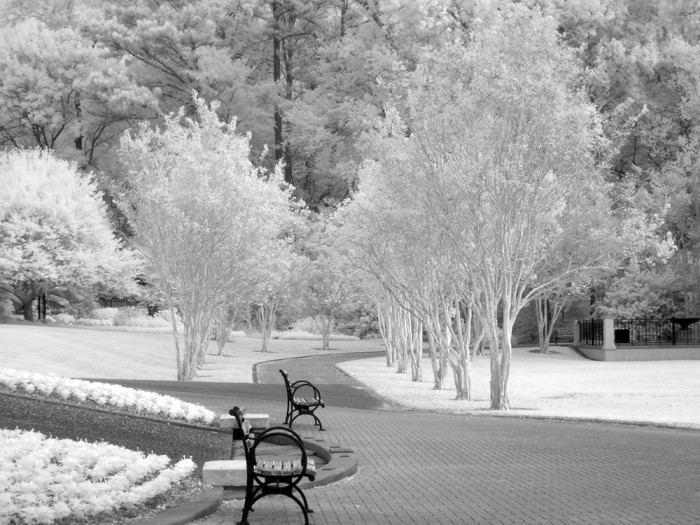 1. Birmingham Botanical Gardens is beautiful throughout the entire year, including the winter season.