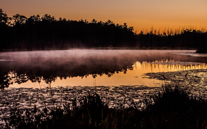 6. Ethereal mist over Roberts Branch in the Pinelands.