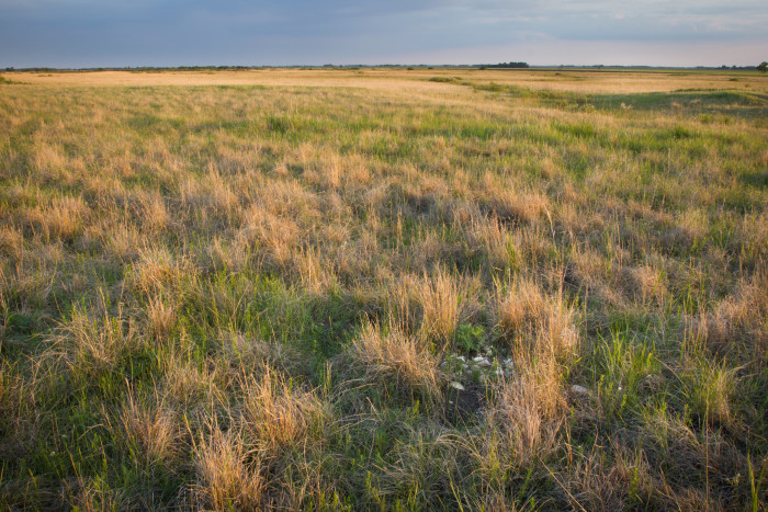 9. Tympanuchus WMA near Crookston is 848 acres of recreation opportunity and endless views!
