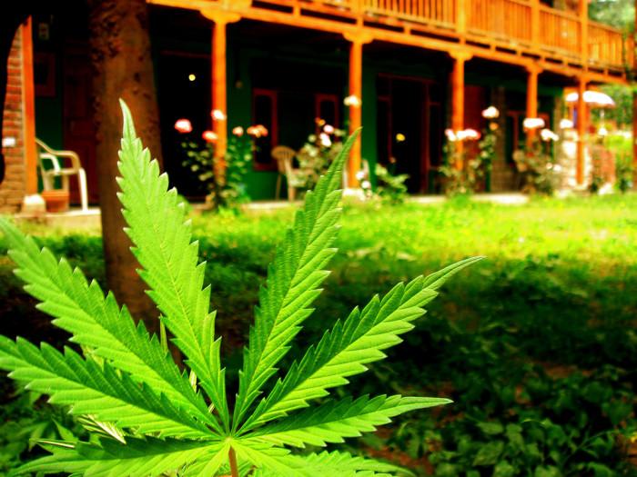 11. So, weed...