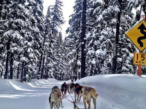 11. Take an unforgettable sled dog ride.