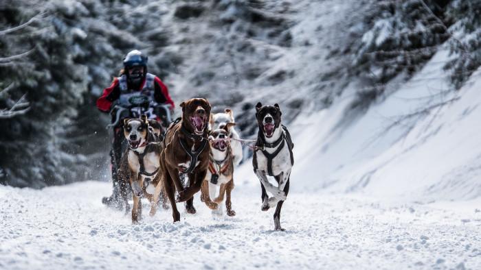 9) Go sledding through a winter wonderland.