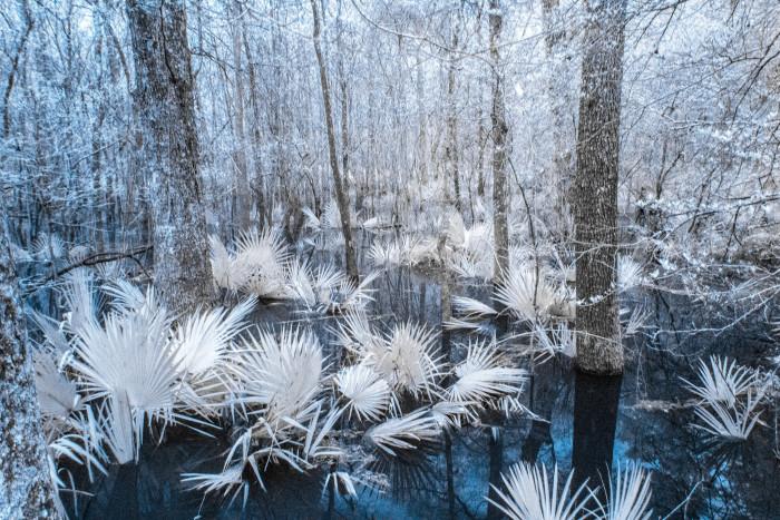 11. Tickfaw Swamp