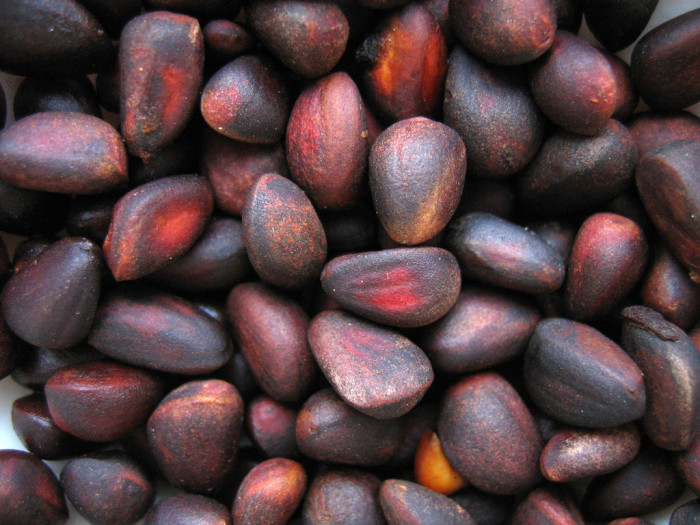 4. Speaking of harvesting, picking piñons (pine nuts) is tedious, but well worth the effort.