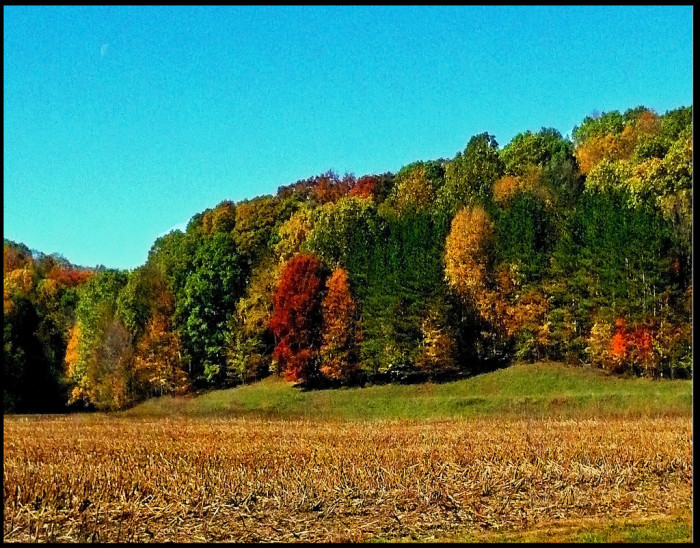 7. Check out this gorgeous autumn landscaping in southern Indiana! I love the way the trees change.