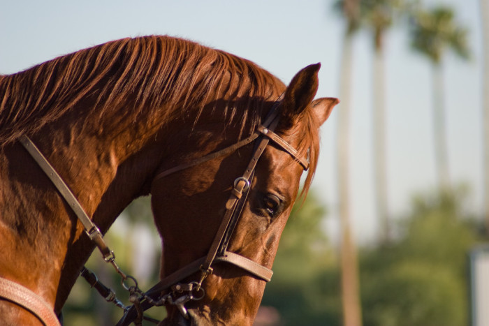 9. How much does a horse cost?