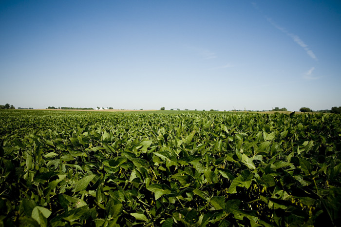 2. And the most soybeans, which do some pretty great things like: feeding your bacon and hamburger, or making crayons and paints.