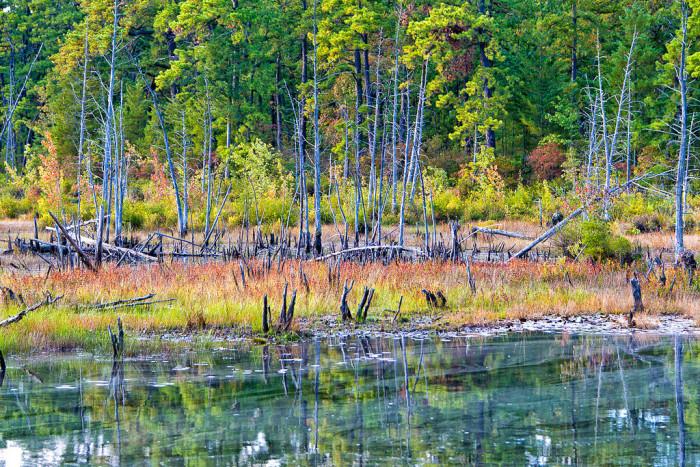 3. Pinelands National Reserve