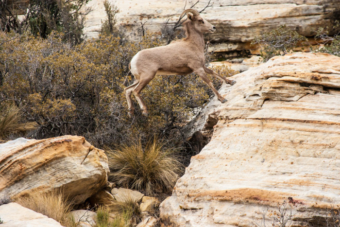 8. Red Rock Canyon National Conservation Area