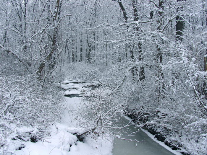 3. There are endless magical, winter photo opportunities: