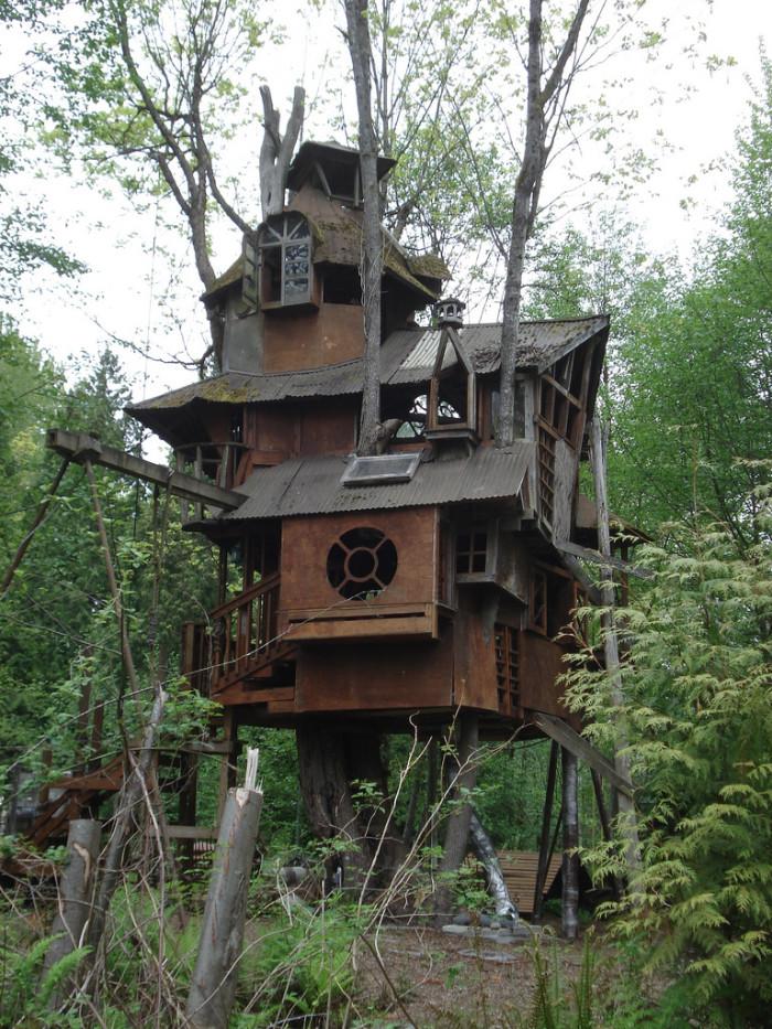 Forgotten Treehouse In Washington