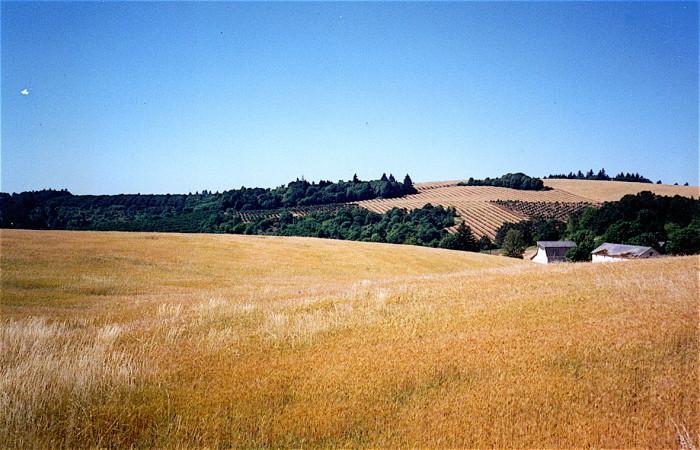 6. Farmland near Salem