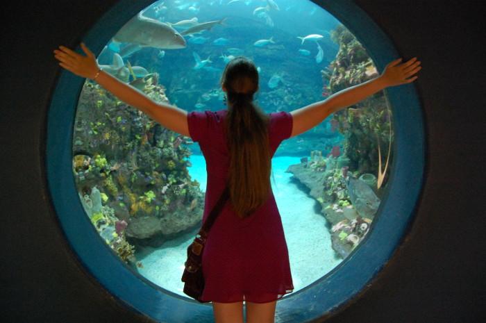 6. North Carolina Aquariums, multiple locations