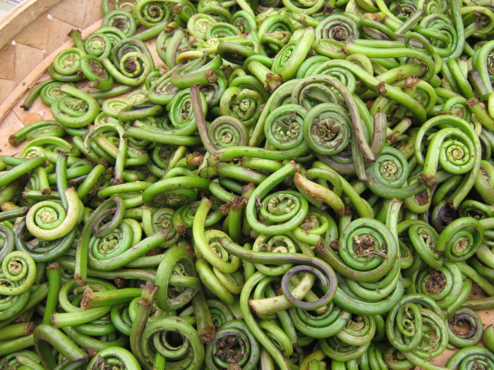 """12. """"So a fiddlehead isn't a person who loves the fiddle? Then what is it?!"""""""