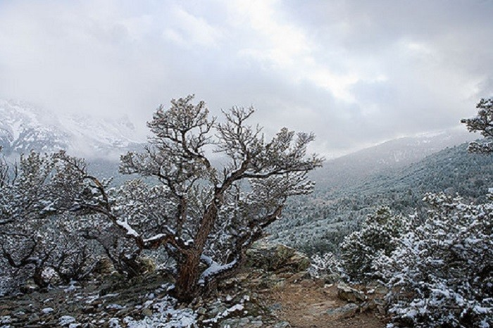11. Great Basin National Park is so beautiful during winter...