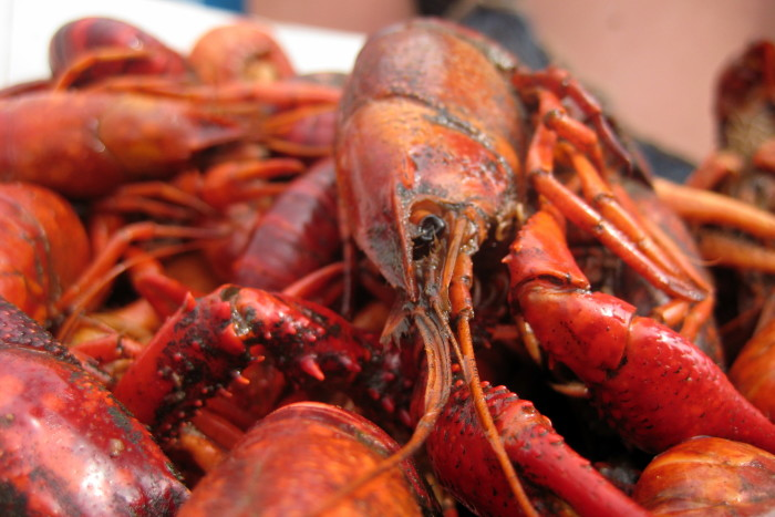 2. There's a good chance you've been to a crawfish boil or two.