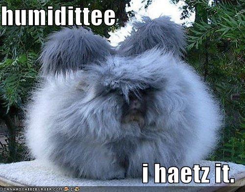 1. Humidity