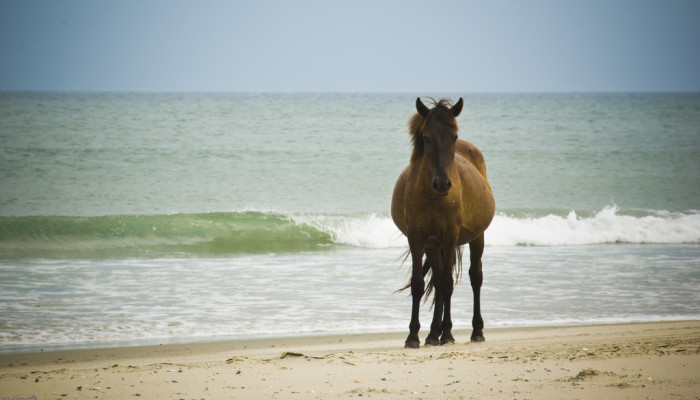 11. Outer Banks
