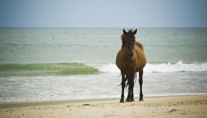 20. Wild horses roaming the beach.