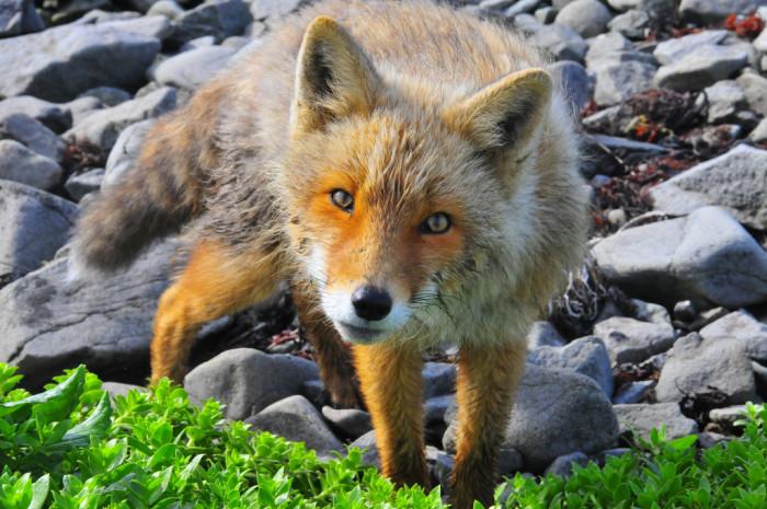 4) Show me the wildlife.