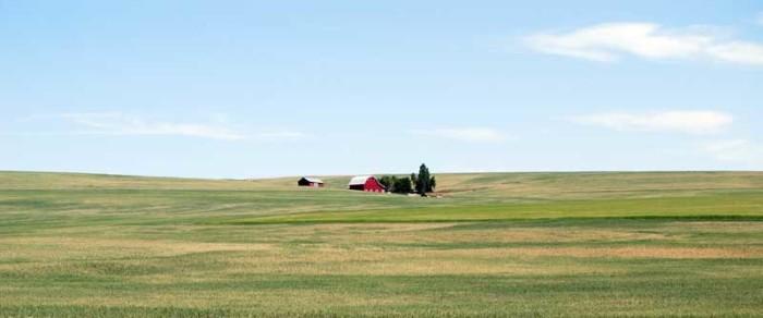 3. Rolling hills of farmland east of Condon.