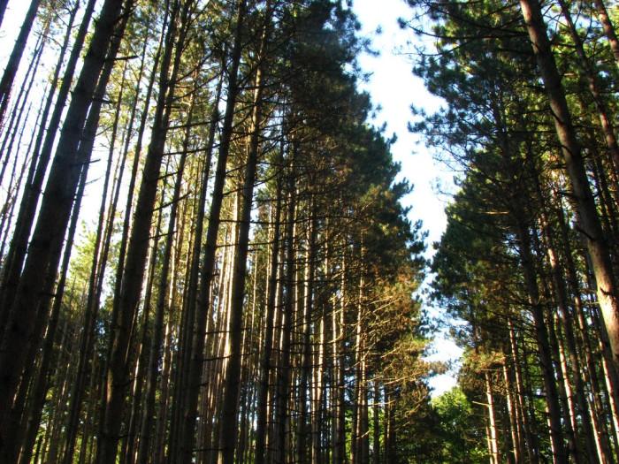 10. Oak Openings (East Swanton)