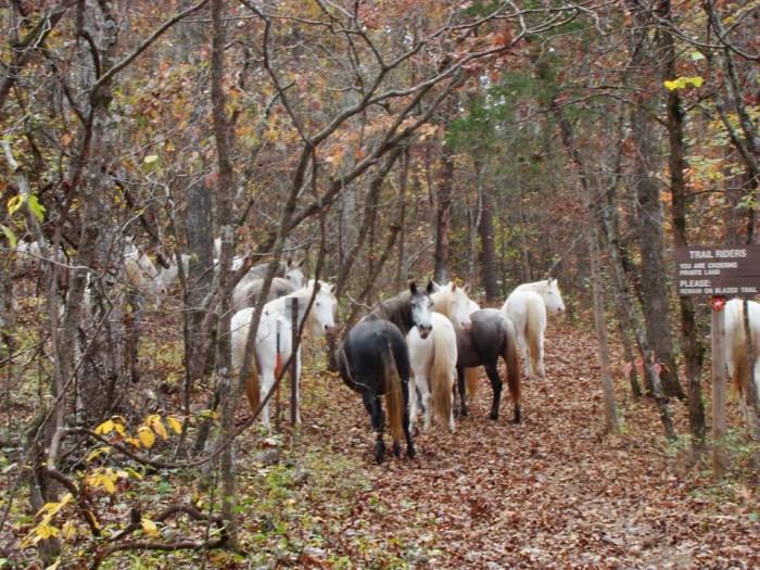 3. Wild horses,  taken in the Two Rivers area, submitted by Margaret Jones, Van Buren, MO.