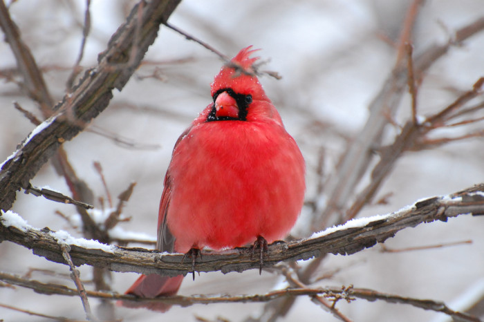 8. We get to share our state with a diverse group of both feathered and furry friends.