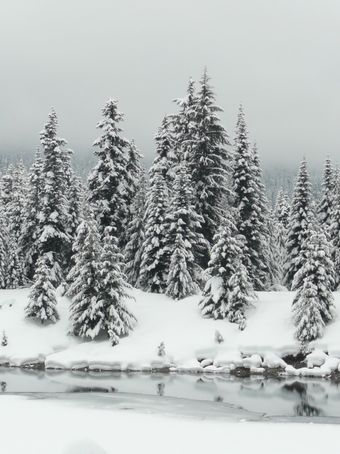 7. A heavenly shot of Evergreen trees covered in snow near Gold Creek Pond.