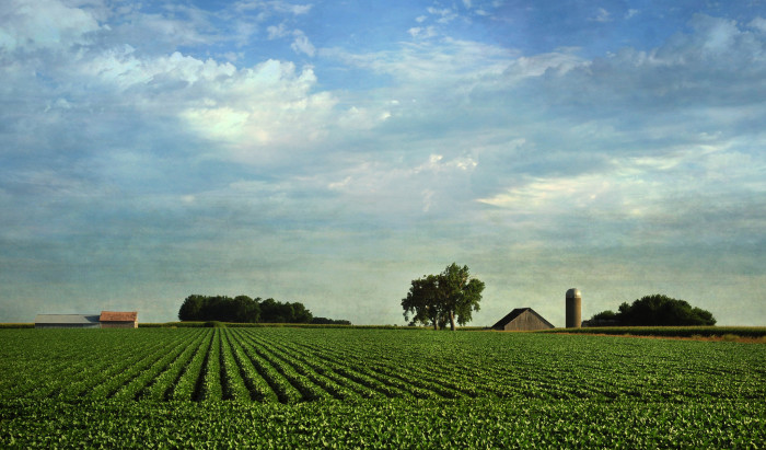 3. The fertile farmland that allows us to grow enough food to feed ourselves and the nation.