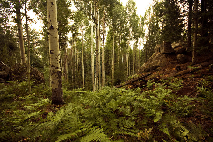 12. We also have beautiful forests!