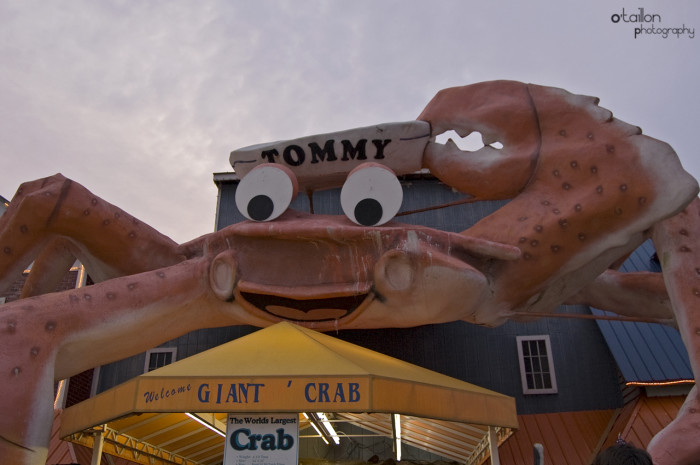 7. Tommy the World's Largest Crab