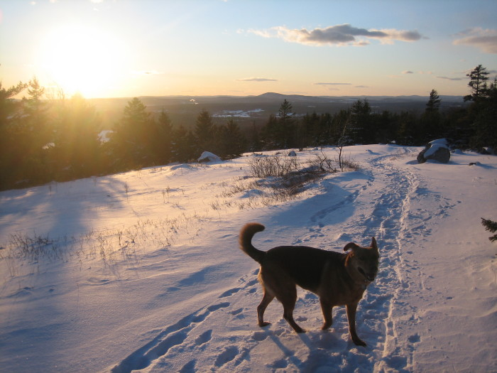 Sunsets! Puppies! Sunsets with puppies! In the snow!