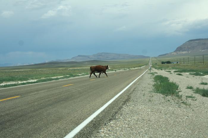 5. Cows