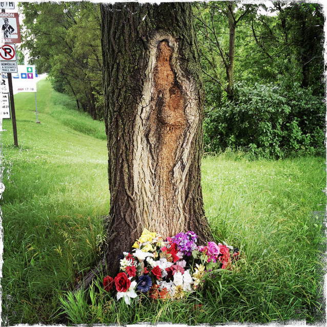 3. The Virgin Mary in a tree, Polk City