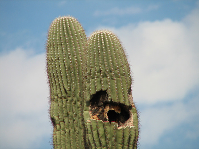 10. Cactus plugging is both illegal and dangerous to your health.