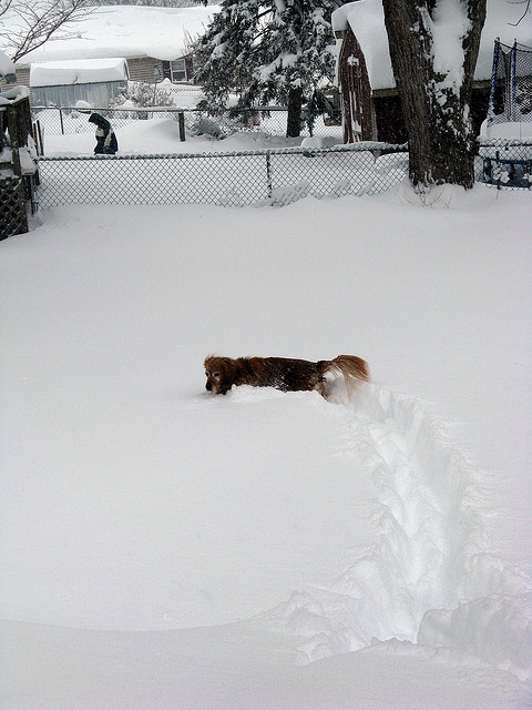 "7. Snow is fun, but not as much fun as watching how your dog reacts to it. ""WHAT IS THIS?!"""