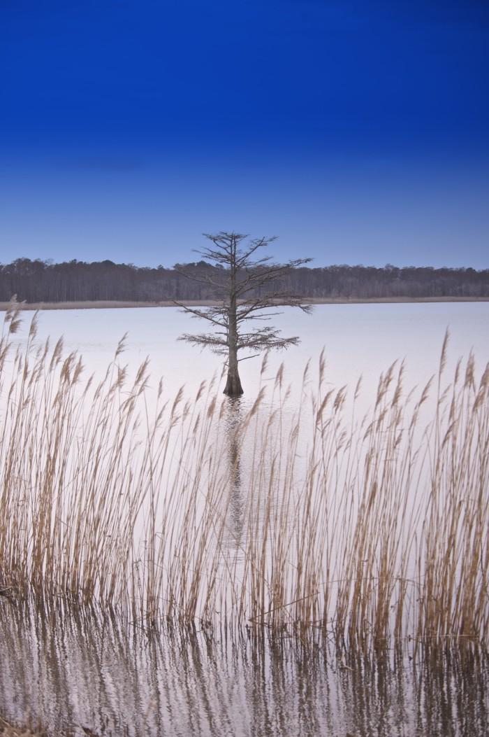 10. Lake Mattamuskeet