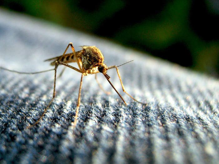 16. How do you avoid mosquitos?