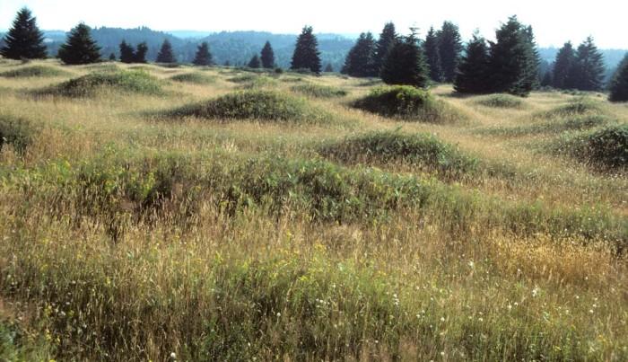4. Mima Mounds