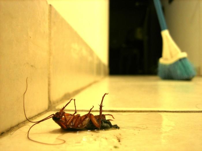 2. Roaches