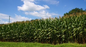 10 Corny Facts Only Someone From Indiana Would Appreciate