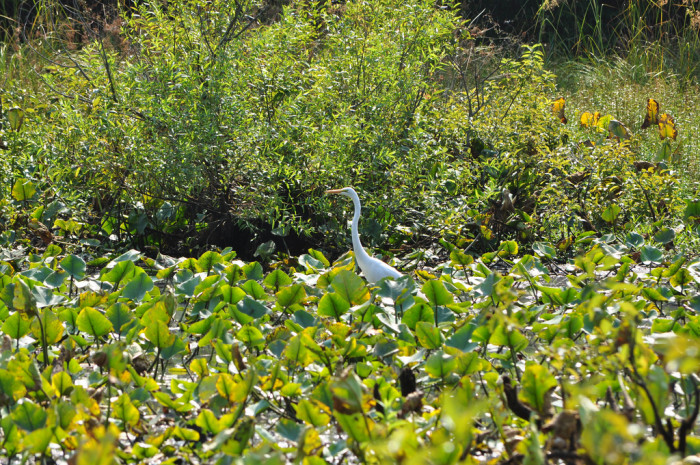 2. Great Swamp National Wildlife Refuge