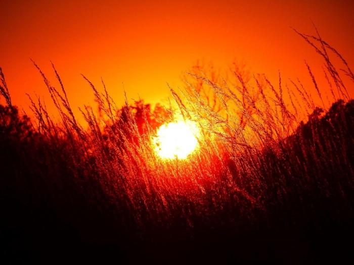 5. Sunset through wheat, August. A. Busch Conservation Area, Defiance, by John Albert Christeson.