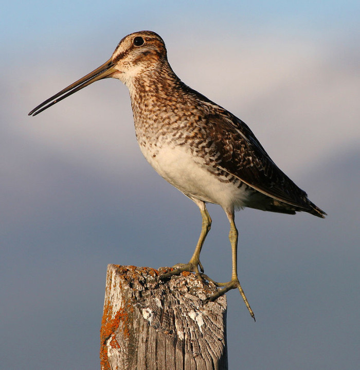 "5. If you're invited ""snipe hunting,"" don't go."