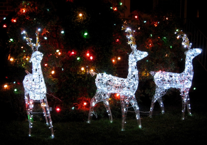 6) Go see the zoo lights at Alaska Zoo.